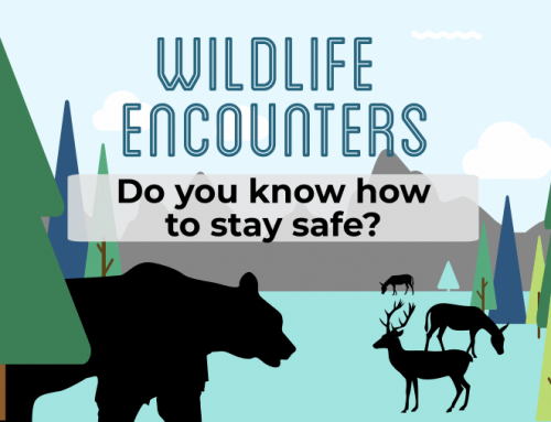 InfoGraphic: Wildlife Encounters