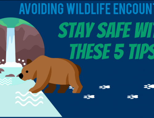 InfoGraphic: Preventing Wildlife Encounters