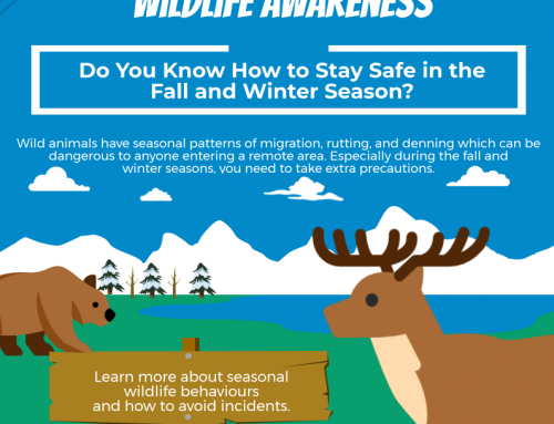 InfoGraphic: Winter Wildlife Safety