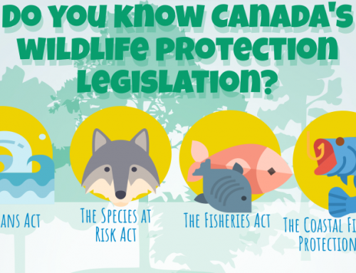 InfoGraphic: Wildlife Protection Legislation