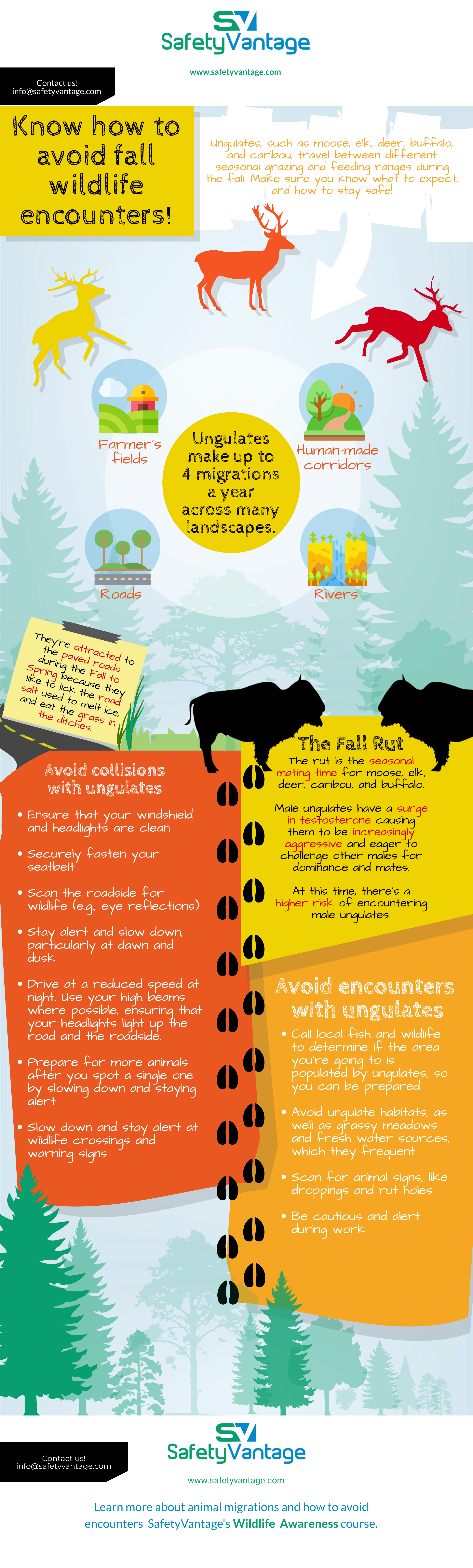 InfoGraphic: Ungulates travel between seasonal grazing and feeding ranges during the fall. Make sure you know what to expect, and how to stay safe!